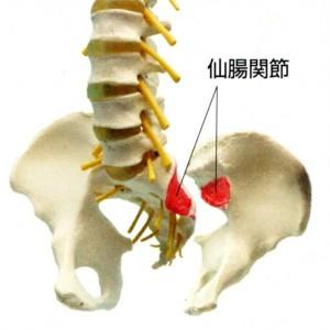 仙腸関節画像